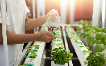 Hydroponic Fertilizer Solutions For Maximum Yields