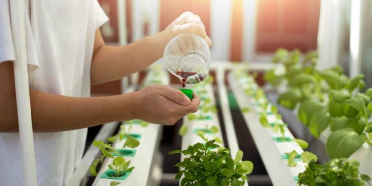 Hydroponic Fertilizer Solutions For Maximum Yields