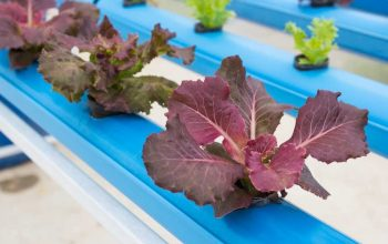 Hydroponic Setups with Inexpensive Materials