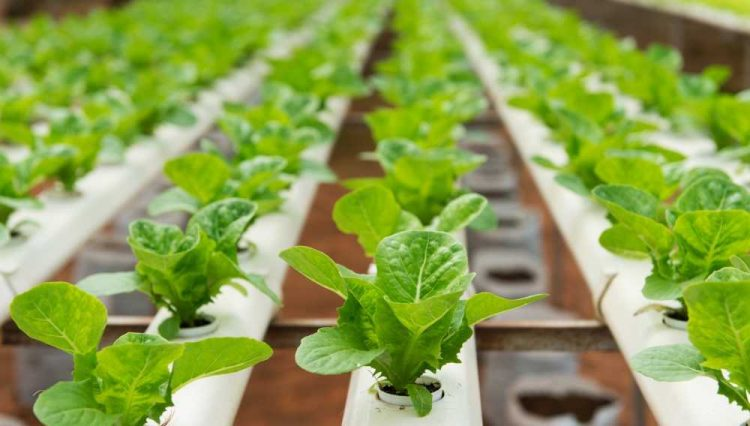 Top 6 Hydroponic Gardening Systems